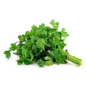 Salsinha-Hidroponica-Todo-Verde-Unidade
