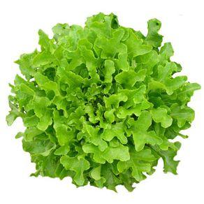 Alface-Hidroponica-Mimosa-Todo-Verde-Unidade
